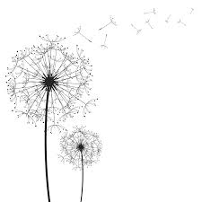 The Dandelion Network